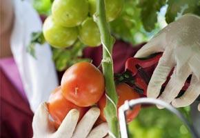 analyse sante végétale