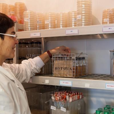 Milieux de culture pour la réalisation des analyses de microbiologie alimentaire