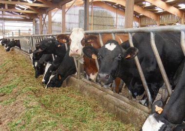 Oligo-éléments, santé et performance des animaux
