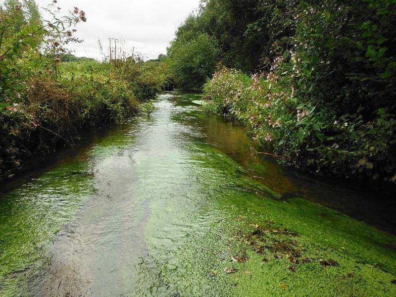 Rivière Bretagne hydrobiologie