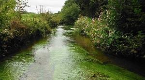Webconférence : qualité des cours d'eau