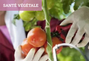 sante-vegetale